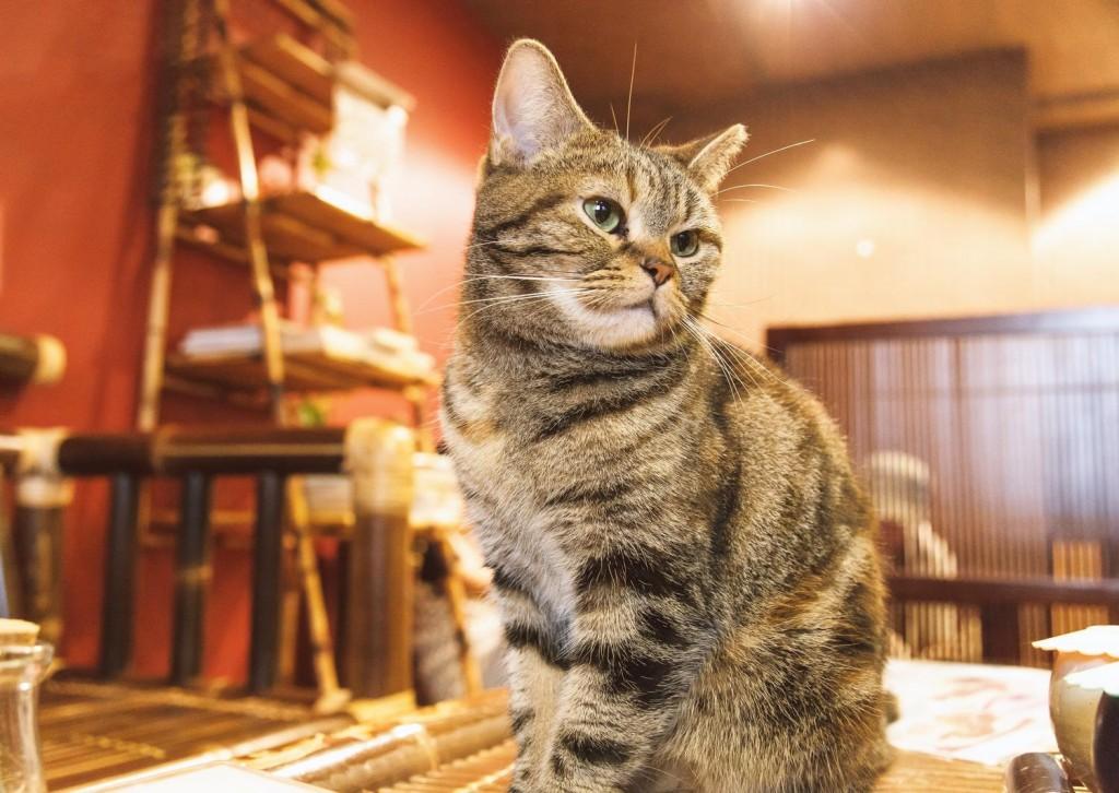 お店の看板猫となって客を出迎える猫