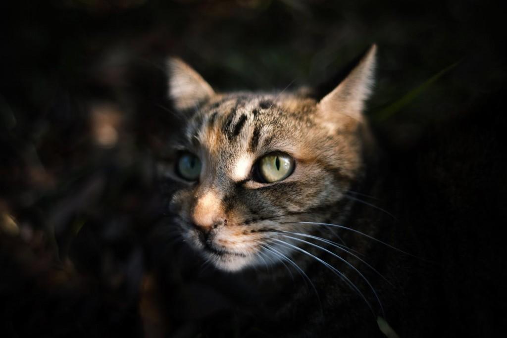 深夜、暗闇の中から顔を覗かせたペットの猫