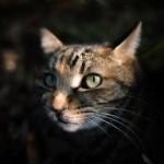 """猫に触ると全身に蕁麻疹が出たり、白目がゼリー状・ゼラチンが出る恐ろしい病気""""ネコアレルギー""""!?"""